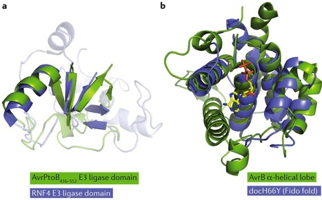 Nature Reviews Microbiology: On the front line: structural insights into plant-pathogen interactions (2013) | Plant pathogen | Scoop.it