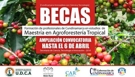 Becas para formación: Maestría en Agroforestería Tropical   Ciencia, Tecnología e Innovación para Cundinamarca.   Scoop.it