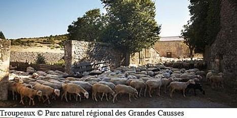 Les Causses et les Cévennes, paysage culturel de l'agro-pastoralisme | Aveyron | Scoop.it