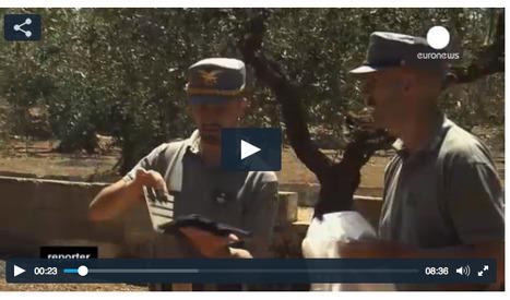 Italie: à l'assaut de la Xylella fastidiosa, la bactérie tueuse d'oliviers | Géographie : les dernières nouvelles de la toile. | Scoop.it