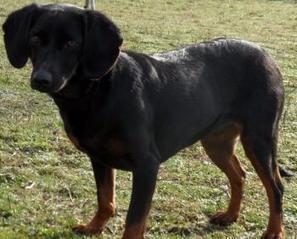 Golfech. Un chien retrouve ses maîtres quatre ans après sa disparition - La Dépêche | CaniCatNews-actualité | Scoop.it