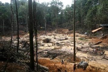 Amazonie : une zone grande comme le Royaume-Uni déforestée par les activités commerciales | The Blog's Revue by OlivierSC | Scoop.it