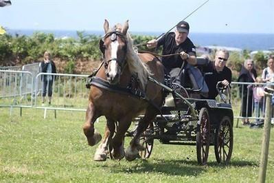 Le cheval breton à l'honneur sur le boulodrome de Keribin , Ploudalmézeau 21/07/2013 - ouest-france.fr   Cheval et sport   Scoop.it