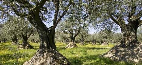 Drôme Provençale - Toute l'information Touristique : Patrimoine, Activités, Hébergement | Provence | Scoop.it