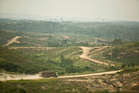 Major forestry company stops Indonesian deforestation | Geography in the classroom | Scoop.it