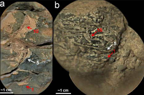 First direct evidence of ancient Mars's oxygen-rich atmosphere   Geology   Scoop.it