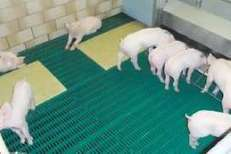 Highly digestible protein sources for piglet feeding | Research | Scoop.it