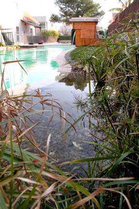Urbanarbolismo » Piscina natural comestible en Valencia. | Ambientales | Scoop.it