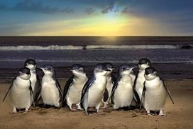 Penguins face serious risk if oil spill occurs | Oil Spill | Scoop.it