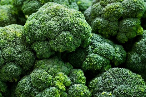 BBSRC funded: 'Sunshine eggs' and automated broccoli score agri-tech funding (Wired UK) | BIOSCIENCE NEWS | Scoop.it