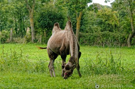 Le chameau Normand et les bâtons flottants de Jean De La Fontaine | photopoesie | Scoop.it