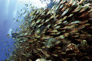 Dive another day: Top 10 scuba diving spots in Oz - TNT Magazine | ScubaObsessed | Scoop.it