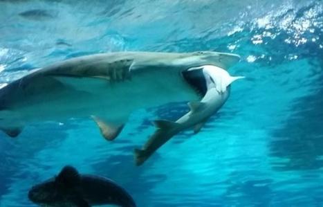 Le bruit des bateaux double la mortalité de poissons par prédation | Biodiversité | Scoop.it