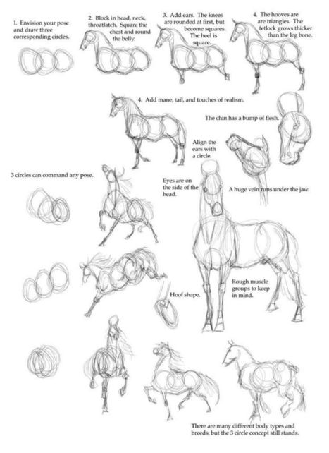 Horse Drawing Reference Guide | Friesian horses | Scoop.it