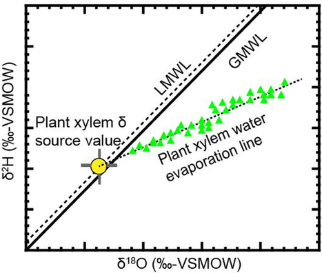 Global separation of plant transpiration from groundwater and streamflow : Nature : Nature Publishing Group | plant cell genetics | Scoop.it