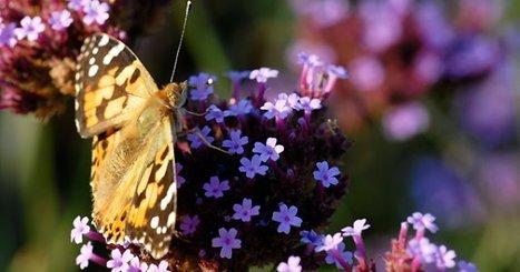 La loi pour la reconquête de la biodiversité, de la nature et des paysages est publiée au journal officiel   Périples et pérégrinations   Scoop.it