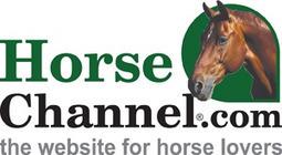 Saddle Fit - HorseChannel.com | Saddlery | Scoop.it