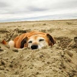 NuVet Reviews : Recognizing Allergies in Dogs | nuvetlabs reviews | Scoop.it