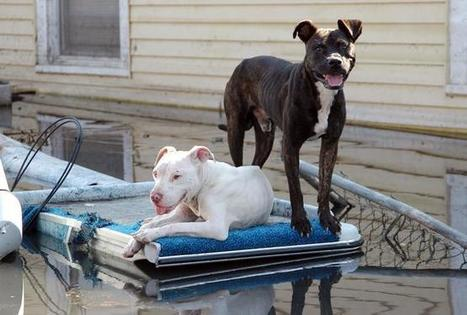 Better response in disasters helps reconnect pets, people   Hurricane Sandy Exploring Implications   Scoop.it