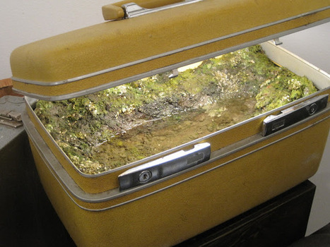 Miniature Landscapes Encapsulated within Steamer Trunks | For Art's Sake-1 | Scoop.it