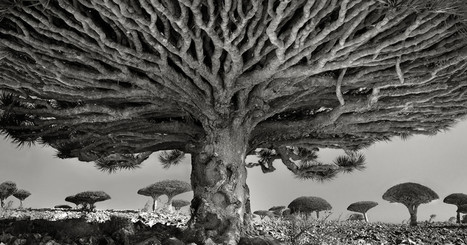 The Most Ancient and Magnificent Trees From Around the World | Together we can make a difference to help our,environment,Oceans,Nature and wildlife. | Scoop.it