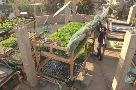 Farmer on the Roof — The Yale Globalist   Vertical Farm - Food Factory   Scoop.it