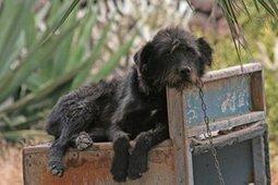 ASPCA Concerned Over Impact of Government Shutdown on Animal Welfare - LongIsland.com | Animals R Us | Scoop.it