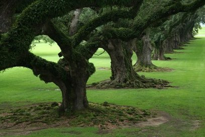 The beautiful oaks... | Facebook | Oak Alley Plantation: Things to see! | Scoop.it