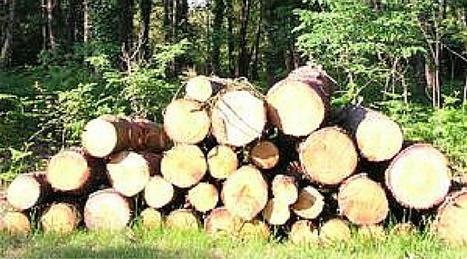 Sanguinet : une visite guidée pour découvrir la forêt   Vacances dans les Landes   Scoop.it