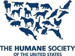 New Report Documents Yahoo! Profits From Killing Endangered Whales and Dolphins : The Humane Society of the United States | Whales | Scoop.it