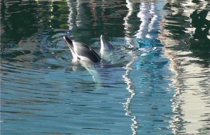 La Seyne, Insolite : Ce matin... deux dauphins... | The Blog's Revue by OlivierSC | Scoop.it