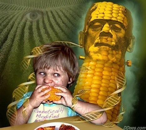 Health Risks Of GMO Foods | Gov & Law- Kelsey Von Berge | Scoop.it