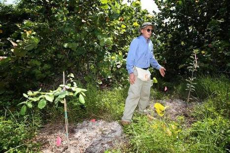Volunteers help transform Miami's Virginia Key from desolate hammock to lush ... - MiamiHerald.com | East Coast Limousine Service | Scoop.it