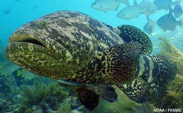 New Year's Resolution 2012: Let's Gain Weight in the Ocean | OUR OCEANS NEED US | Scoop.it