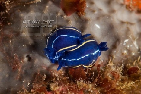 Best of Lentille macro ATOM de DYRON - Le Blog de la Plongée Bio   photo sous-marine   Scoop.it
