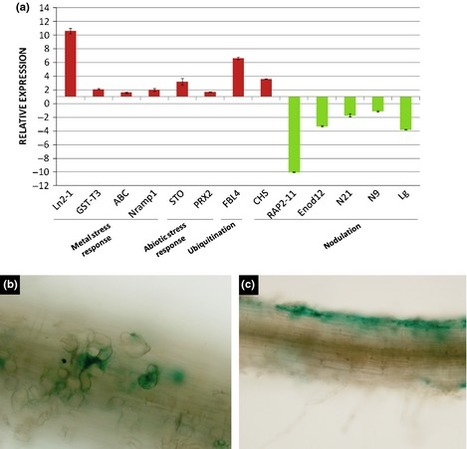 New Phytol: Unraveling the effect of arsenic on the model Medicago–Ensifer interaction: a transcriptomic meta-analysis | Fungicide Hormesis | Scoop.it