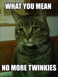 No More Twinkies - Socks On An Octopus | SOAO Funny and Unusual | Scoop.it
