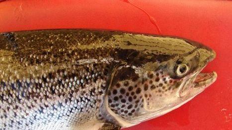 Aquaculture gets federal money - ABC Local | Aquaculture (Global Aqua Link) | Scoop.it