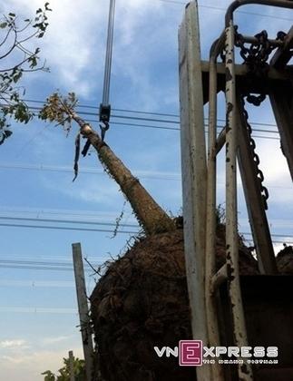 Power cut in Southern Vietnam caused by a crane - News VietNamNet | International relations | Scoop.it