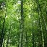 """Environnement, Pollution et Eco-Logis """"AutreMent"""""""