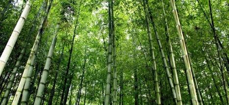 La Chine construit un mur d'arbres pour lutter contre le réchauffement climatique | CRAKKS | Scoop.it