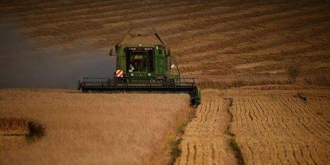 Le grenier à blé sous tension climatique - Sud Ouest | Agriculture et Alimentation méditerranéenne durable | Scoop.it