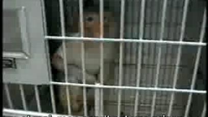 Libération animale - Free Me | les vents du monde | Scoop.it