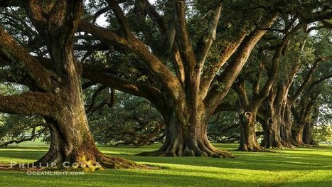 Tweet from @ArielDarkStar | Oak Alley Plantation: Things to see! | Scoop.it
