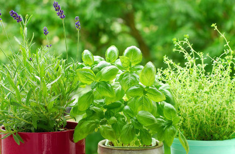 Tips for Growing Food in a Small Space - Earth911.com | Gardening | Scoop.it