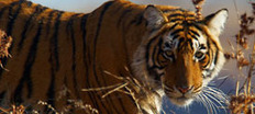 Wildlife Conservation, Endangered Species Conservation   Eco - Issues   Scoop.it
