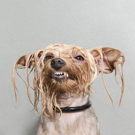 Wet Dog Photographs from Sophie Gamand | What's new in Visual Communication? | Scoop.it