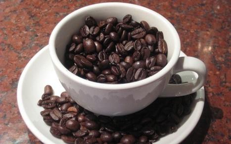 Caffeine may ease Parkinson's symptoms | McGill University Health Centre | Brain Plasticity | Scoop.it