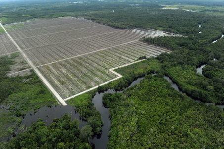 «La COP21 ne pourra pas ignorer la question de la faim» | Matière agricole | Scoop.it