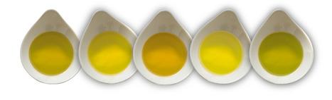 Qu'indique la couleur de l'huile d'olive? | oléiculture | Scoop.it